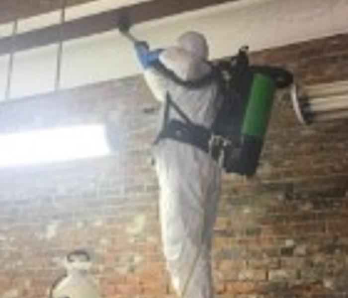 Mold Cleaning in Centerville